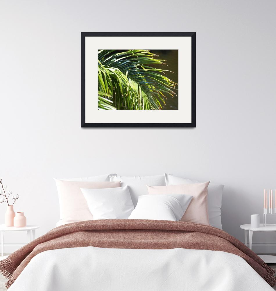 """""""Close-up of a Palm Frond""""  (2010) by yourpictureshop"""