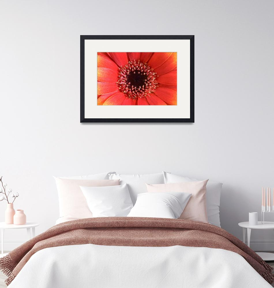 """Orange Gerbera Flower Wall Art""  (2004) by NatalieKinnear"