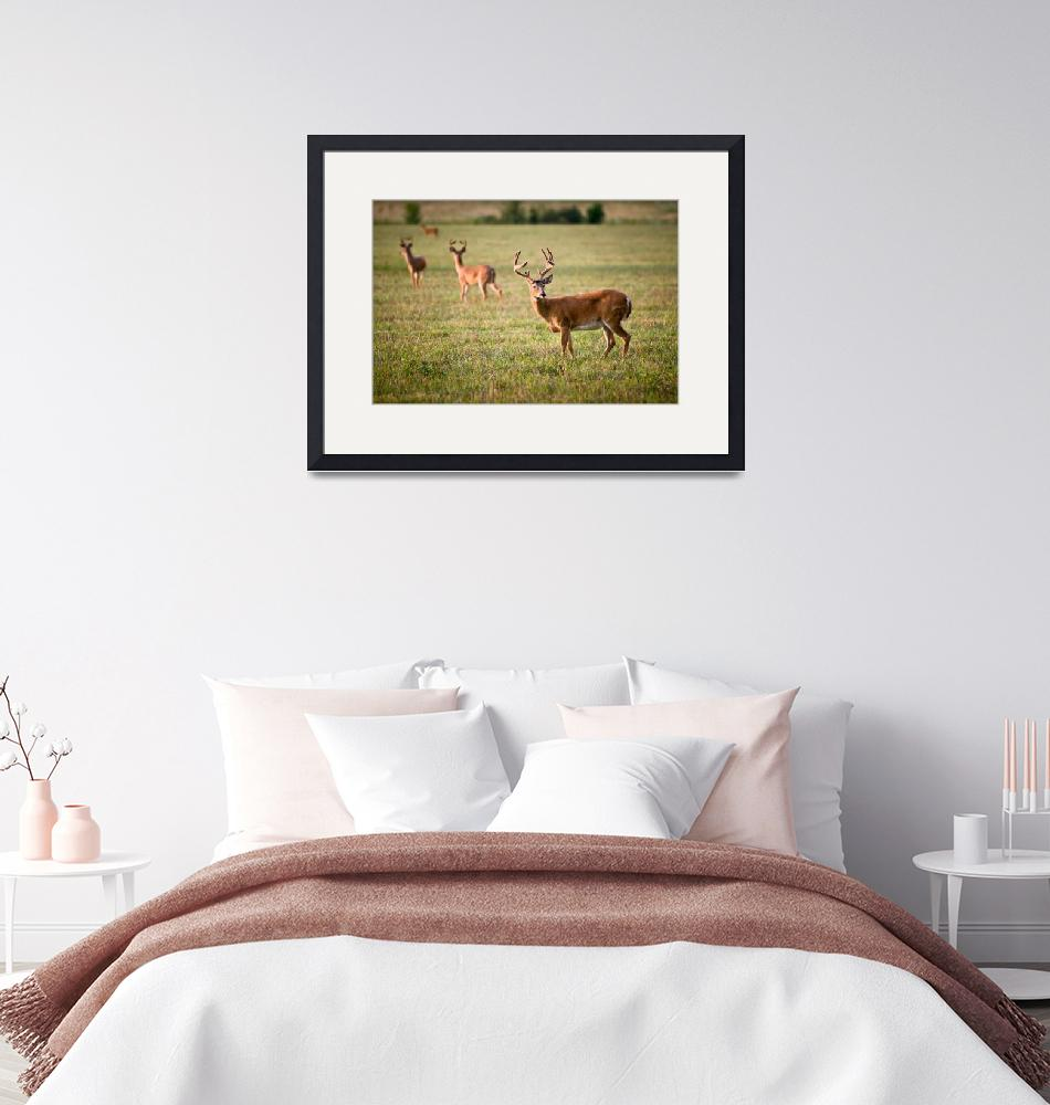 """""""White Tailed Deer Wildlife Photography Nature""""  (2010) by DAPhoto"""