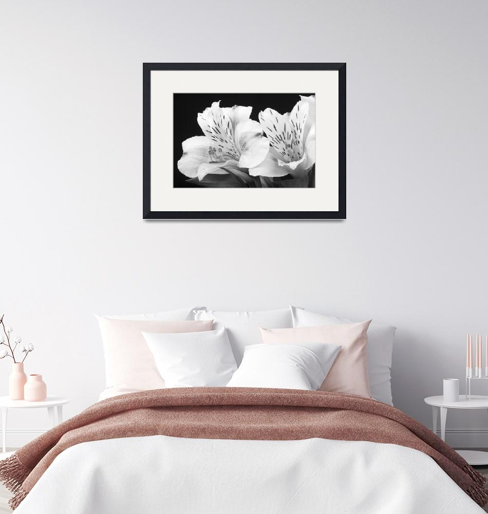 """Peruvian Lilies Botanical Black and White Print""  (2011) by lightningman"