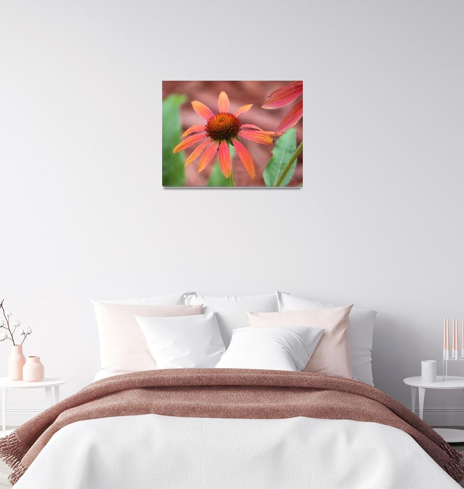 """""""Wild flowers""""  by cameragal"""
