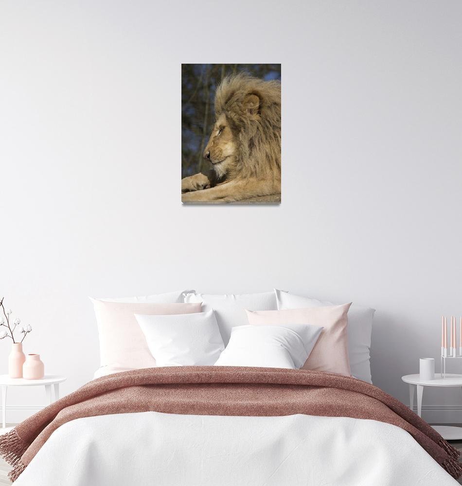 """RW1516 White Lion""  (2013) by loversdream"