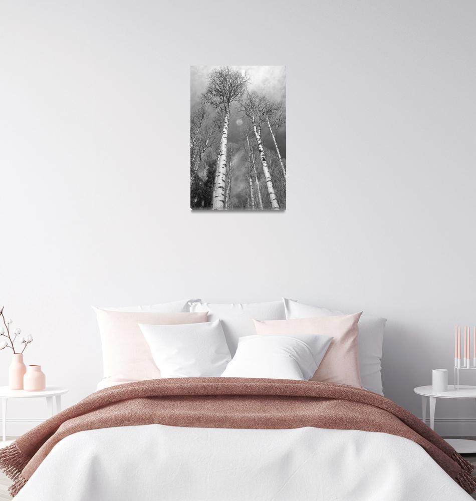 """Towering Aspen Trees in Black and White""  (2010) by lightningman"