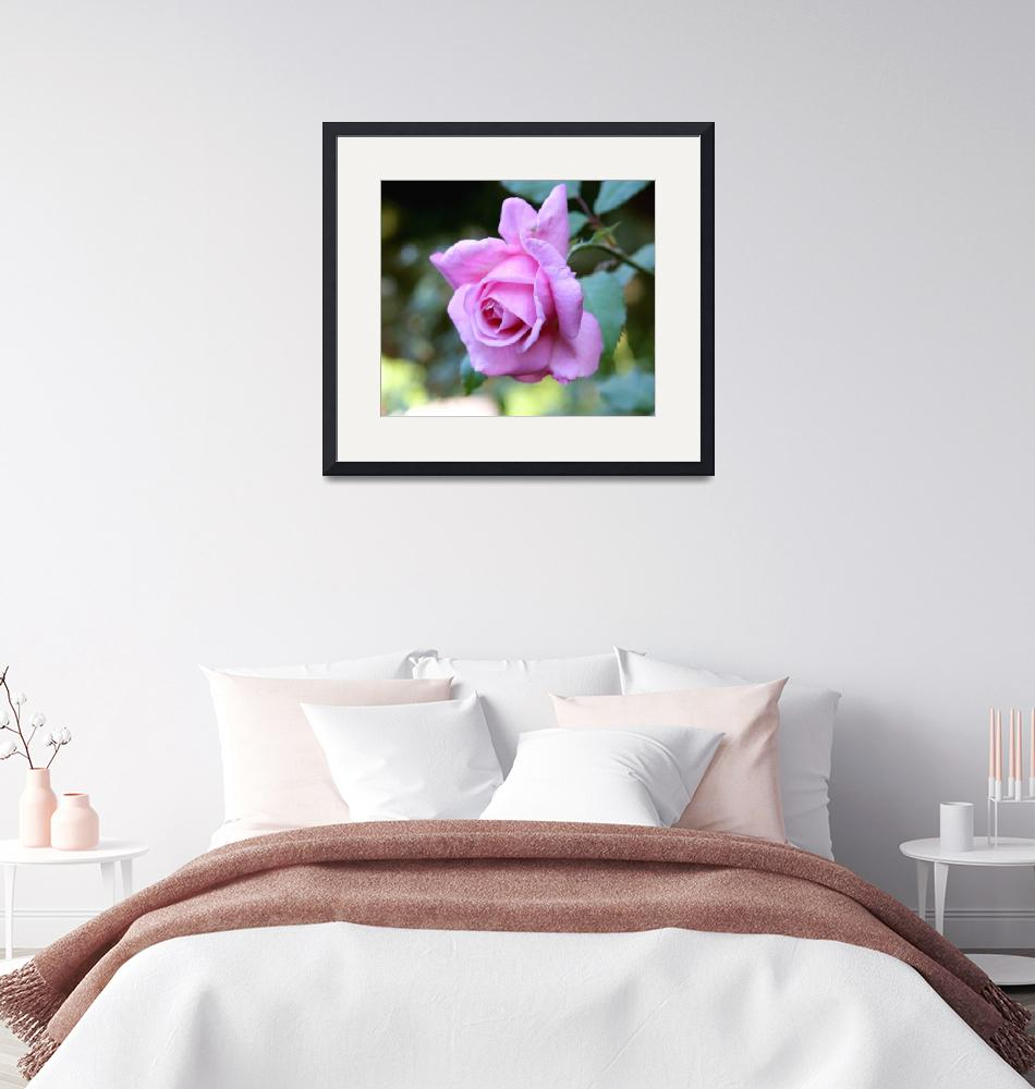 """""""Romantic Rose""""  (2008) by rayjacque"""