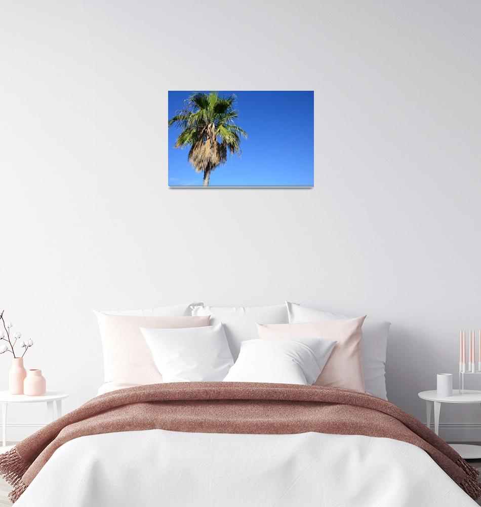 """""""The view of the palm tree""""  (2018) by danieltoryfter"""