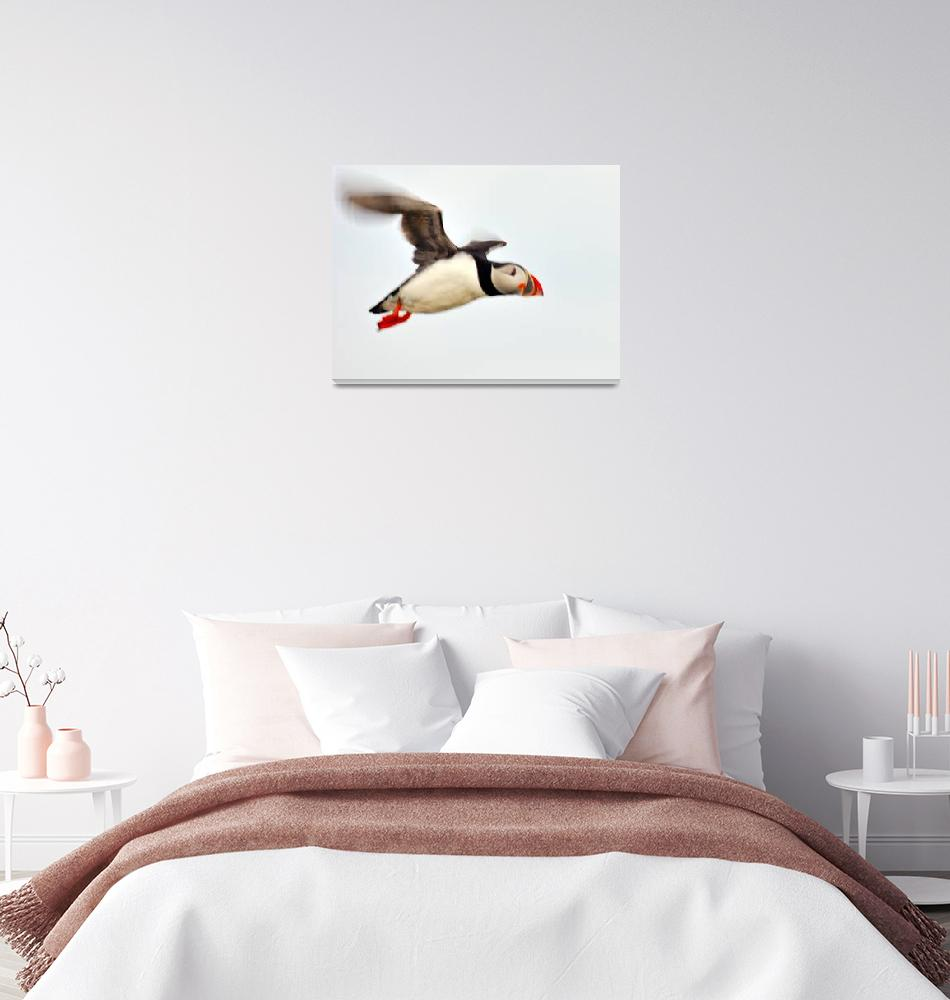"""""""Puffin In Flight""""  (2005) by JoaoPonces"""