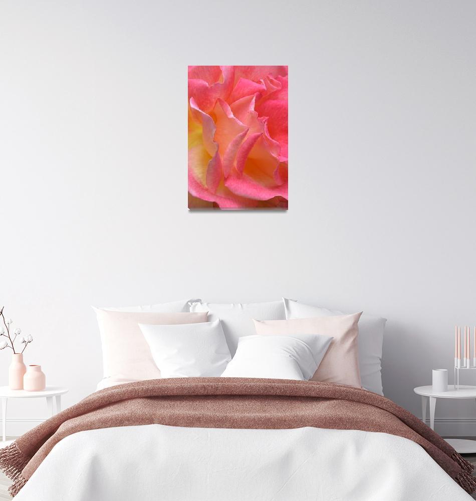 """""Hot Pink Yellow Rose 2"" #3070513""  (2013) by achimkrasenbrinkart"