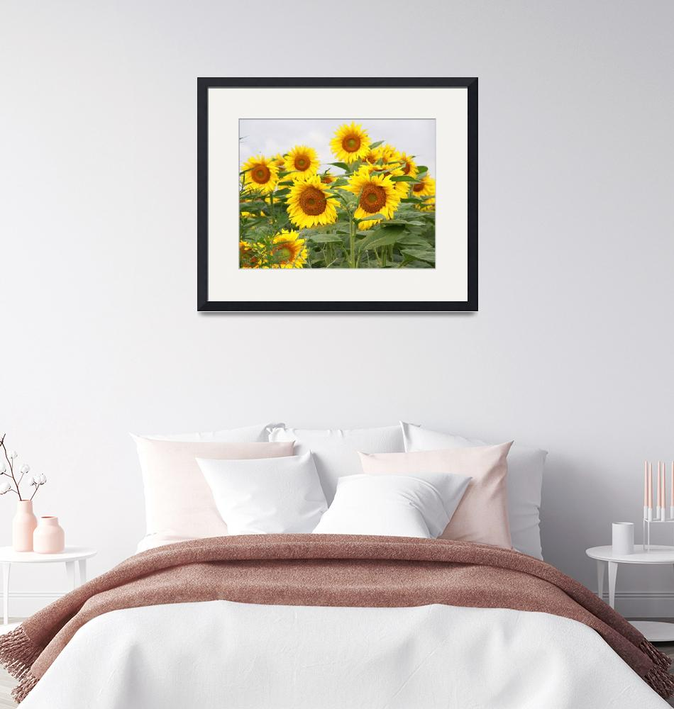 """Sunflower field""  (2010) by easyfigure"