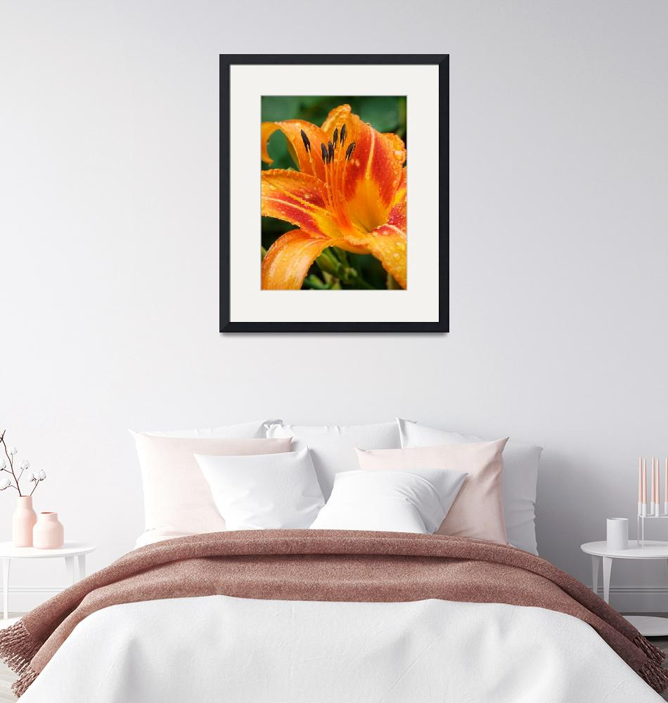 """""""Day Lily""""  (2009) by georgejonesgallery"""