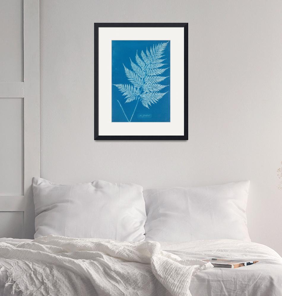 """""""Anna Atkins~New Zealand""""  by Old_master"""