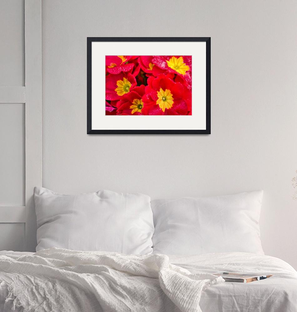 """""""Morning Red"""" (2012) by boppintheblues"""