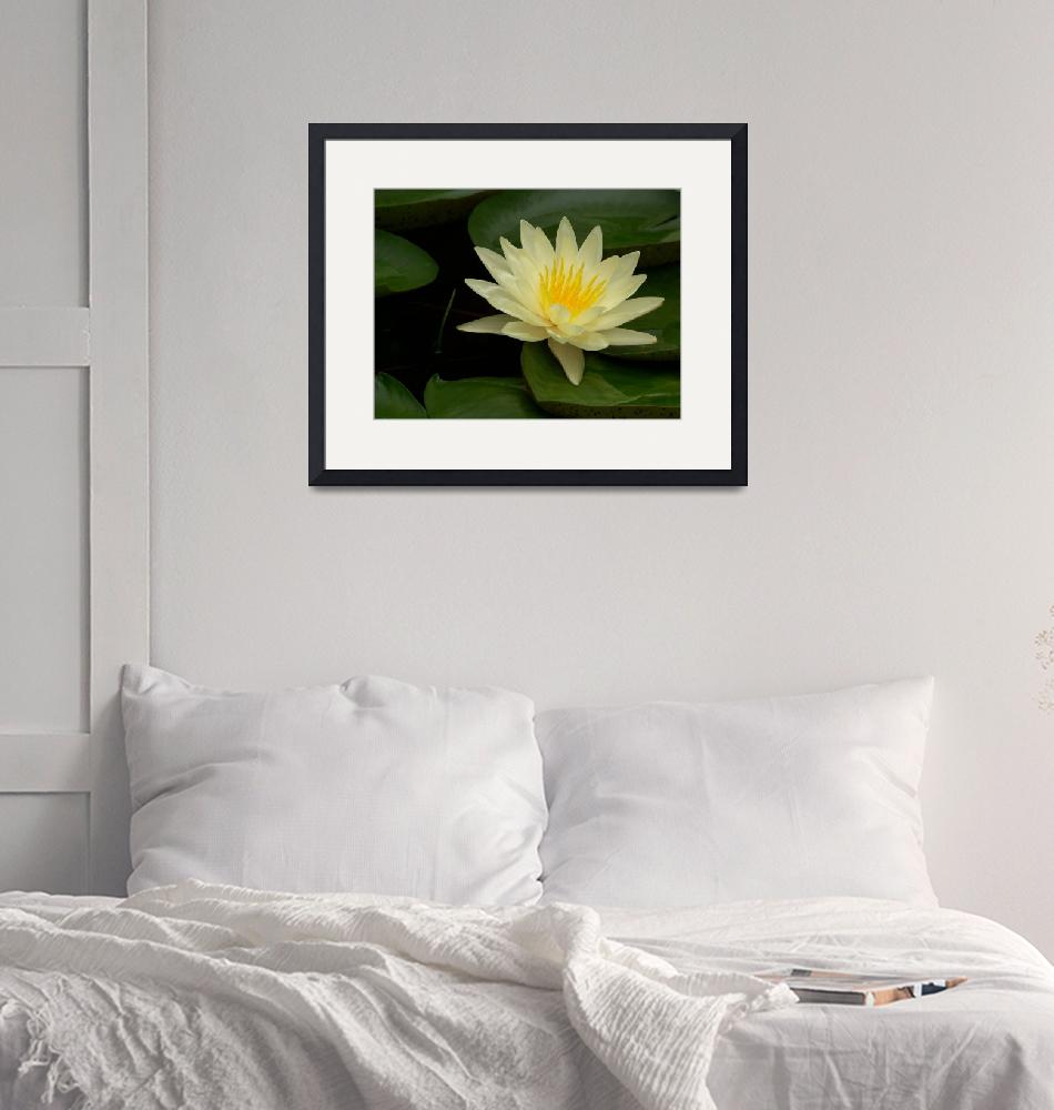 """""""Water Lily""""  by protoflux"""