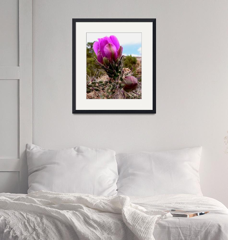 """""""Cactus Blossom Buds - New Mexico Wildflower""""  (2008) by rayjacque"""