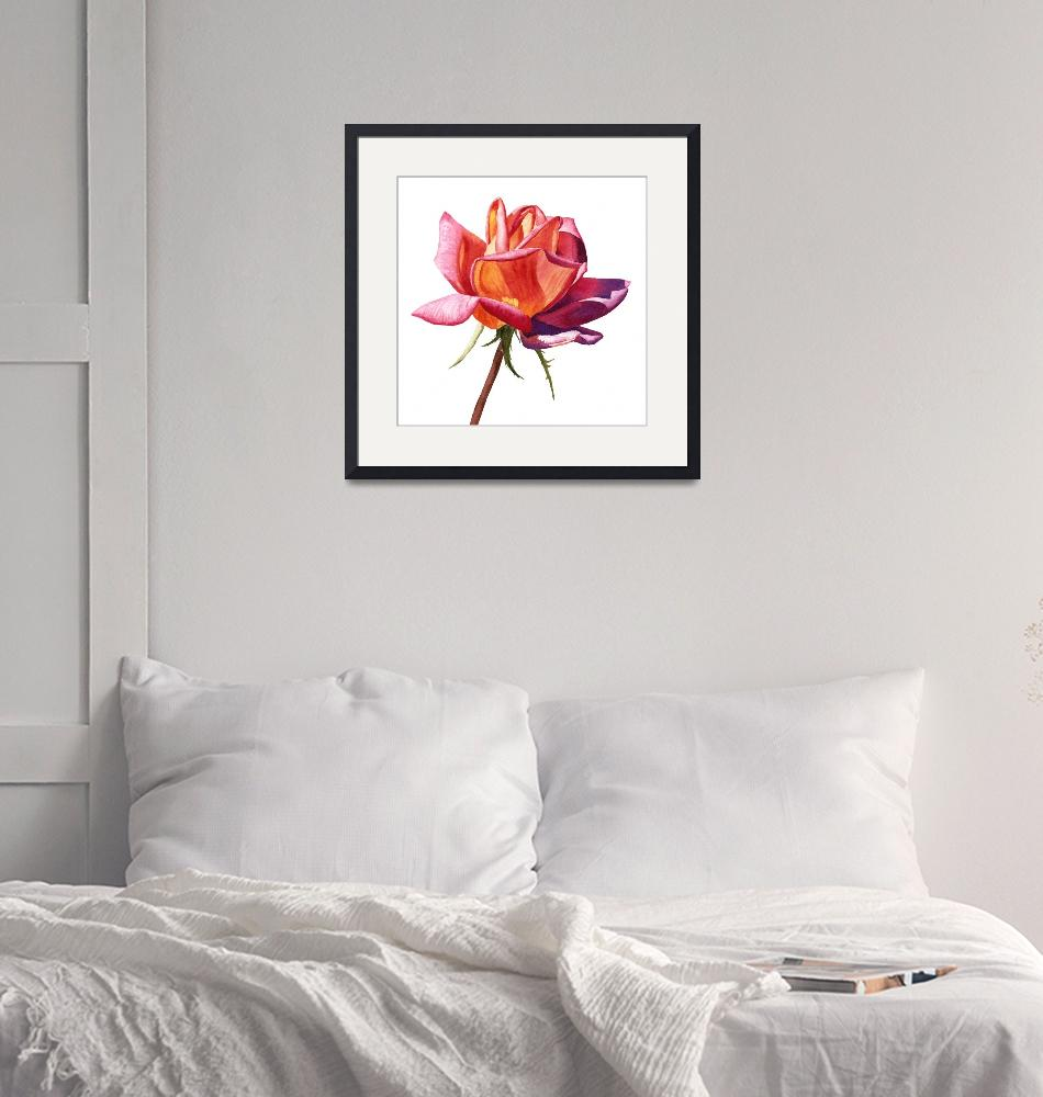"""orange rose bud purple shadows""  (2019) by Pacific-NW-Watercolors"