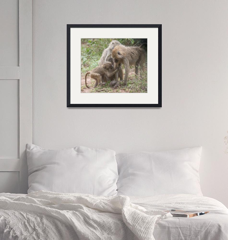 """""""baboonfamily1""""  (2014) by SederquistPhotography"""