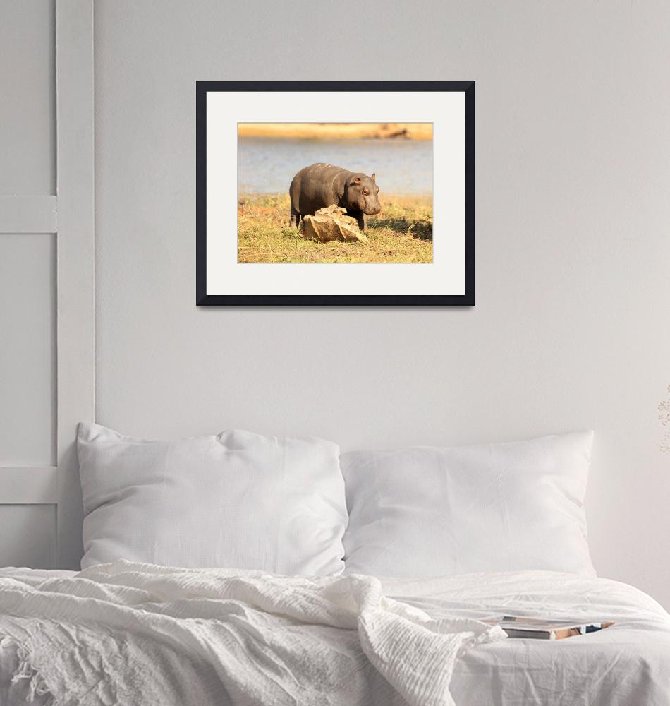 """""""Baby Hippo 5431""""  (2013) by rayjacque"""
