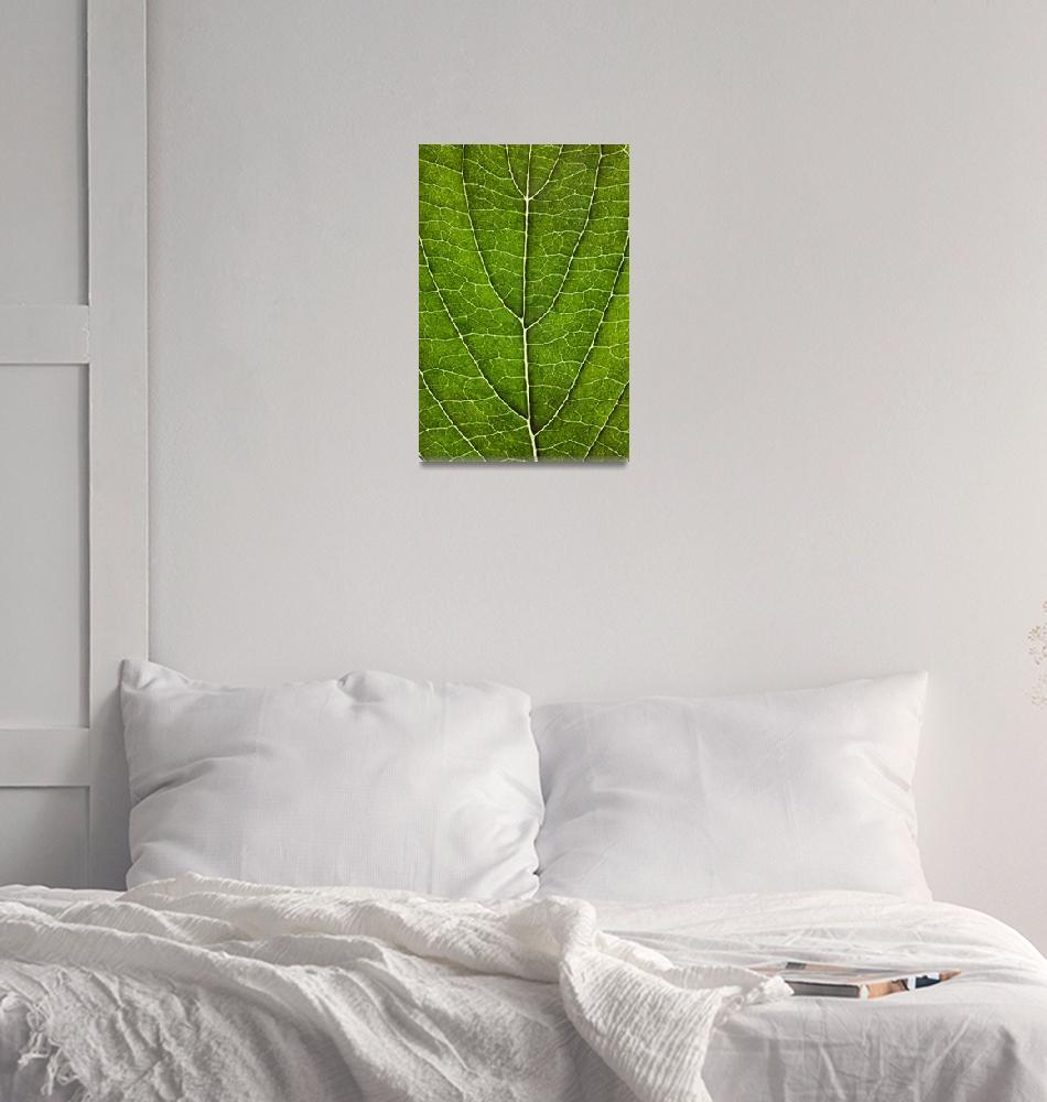"""Leaf Lines VII""  (2008) by NatalieKinnear"