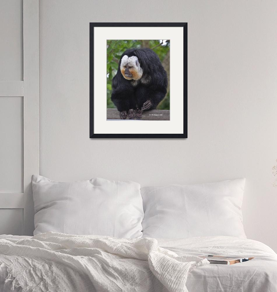 """White Faced Saki""  (2012) by awsheffield"