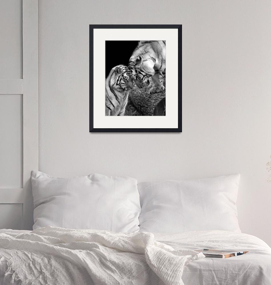 """""""Tiger Love Siberian Tigers Black and White Print""""  (2011) by StephsShoes"""