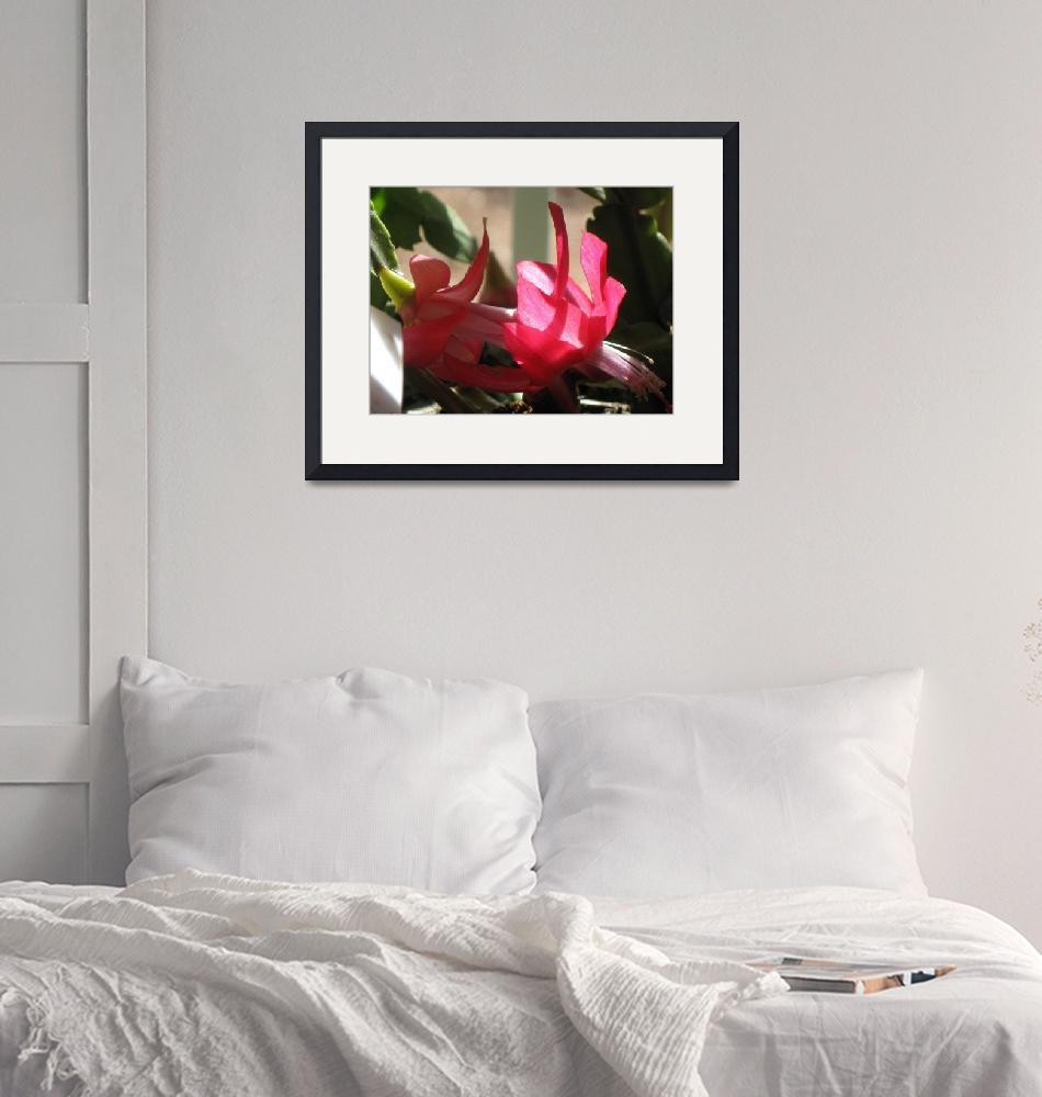 """""""Holiday cactus bloom 2""""  (2009) by henrimonet"""