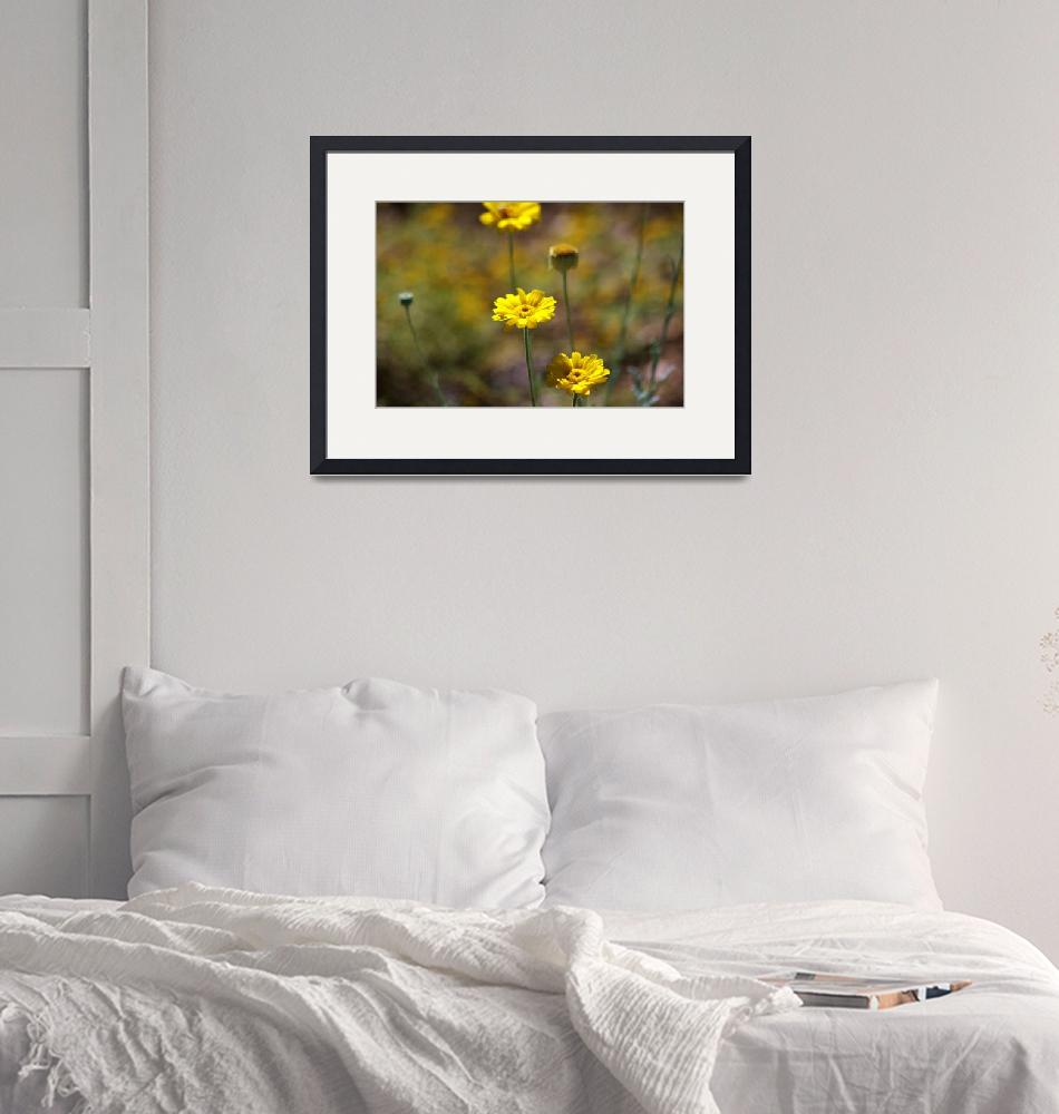 """""""Warmth of Wildflowers""""  (2008) by lizleslie"""