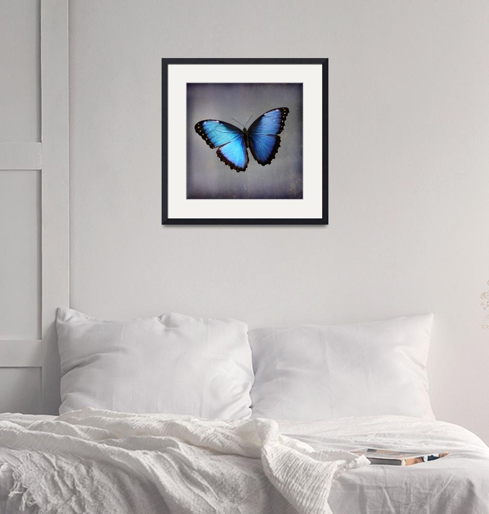 """Blue Morpho Butterfly Square""  (2015) by KsWorldArt"