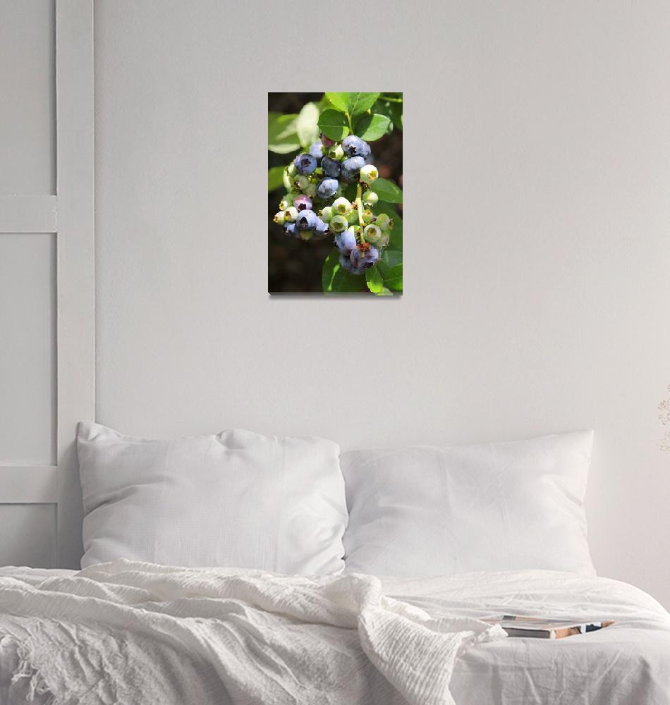 """""""Beautiful Blueberries""""  by Groecar"""