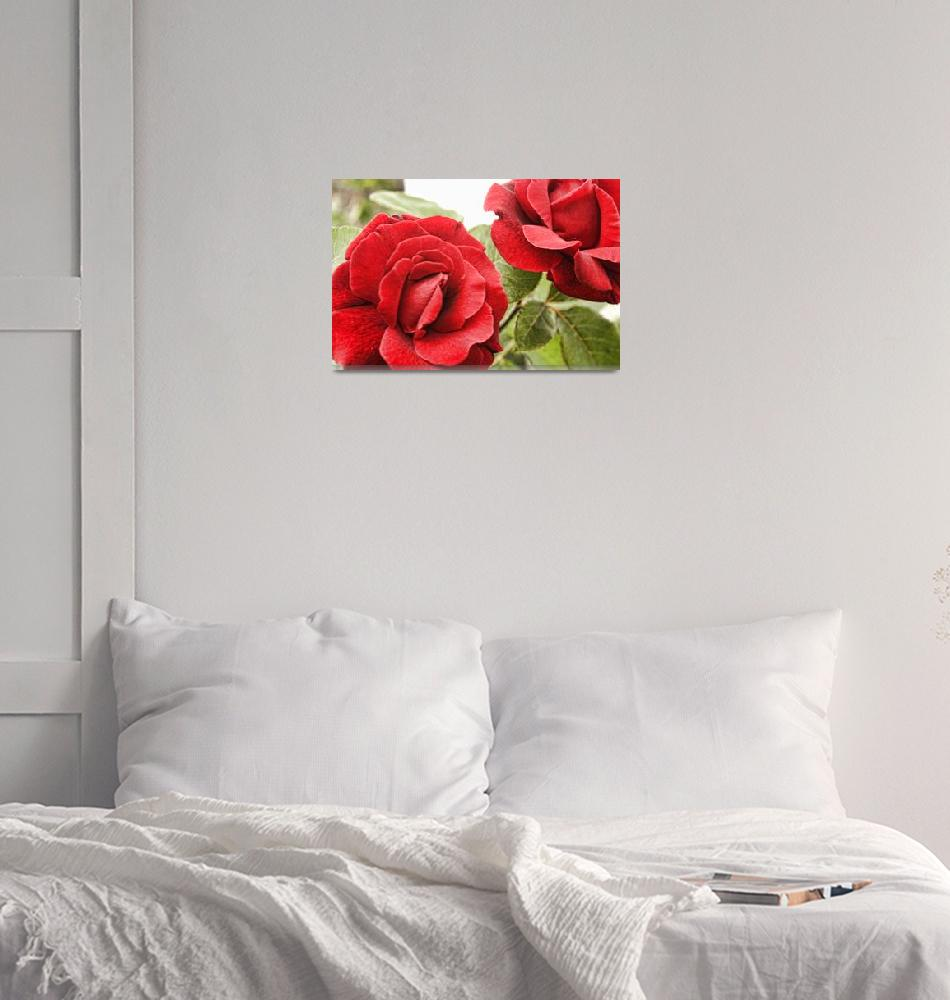 """Morning Roses""  (2011) by AlexButler"