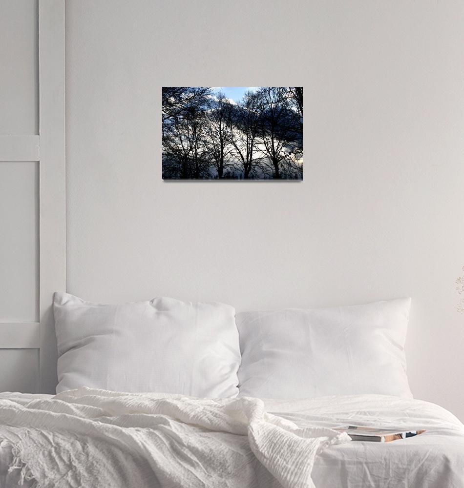 """Italian trees""  (2012) by getshaped"