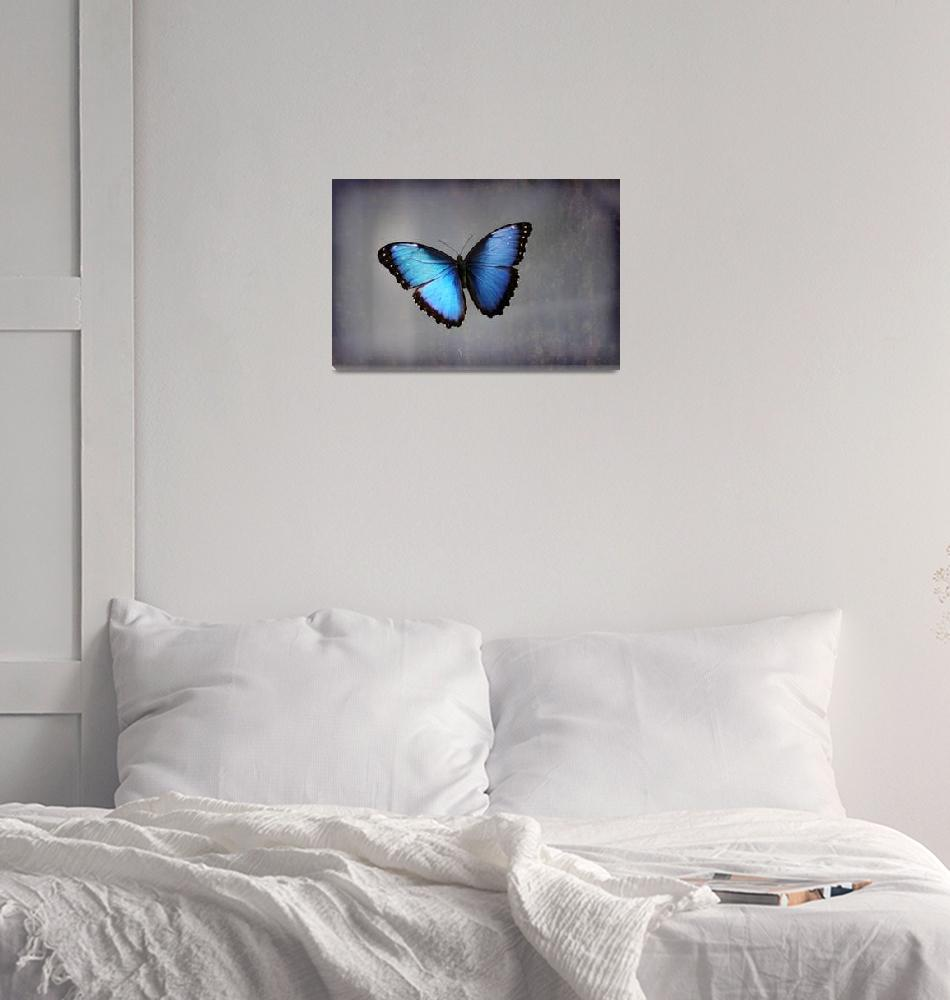 """Blue Morpho Butterfly""  (2015) by KsWorldArt"