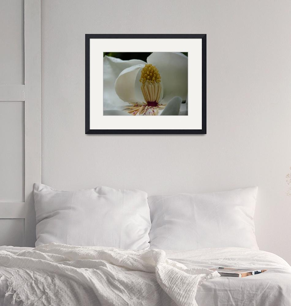 """""""Magnolia 1, Dee Oberle""""  by GypsyChicksPhotography"""
