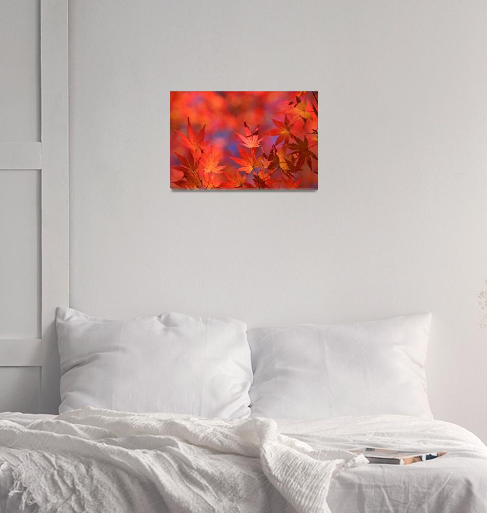 """""""Autumn Flames""""  (2008) by ImageArt-Photography"""