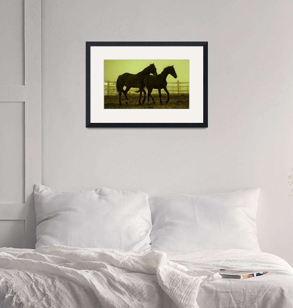"""""""Horses in the Mist""""  (2012) by lookinglass"""
