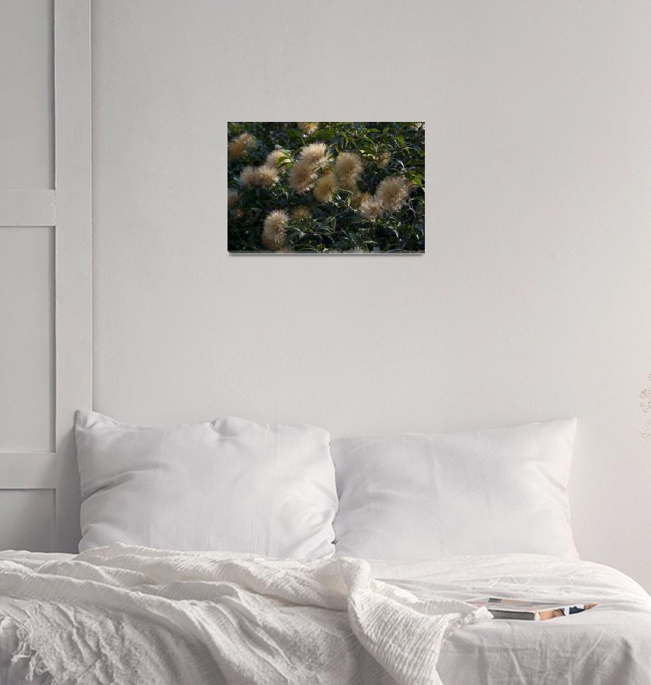 """flower-give-friendship, pompom, brush and sponge""  (2010) by einsiedler"