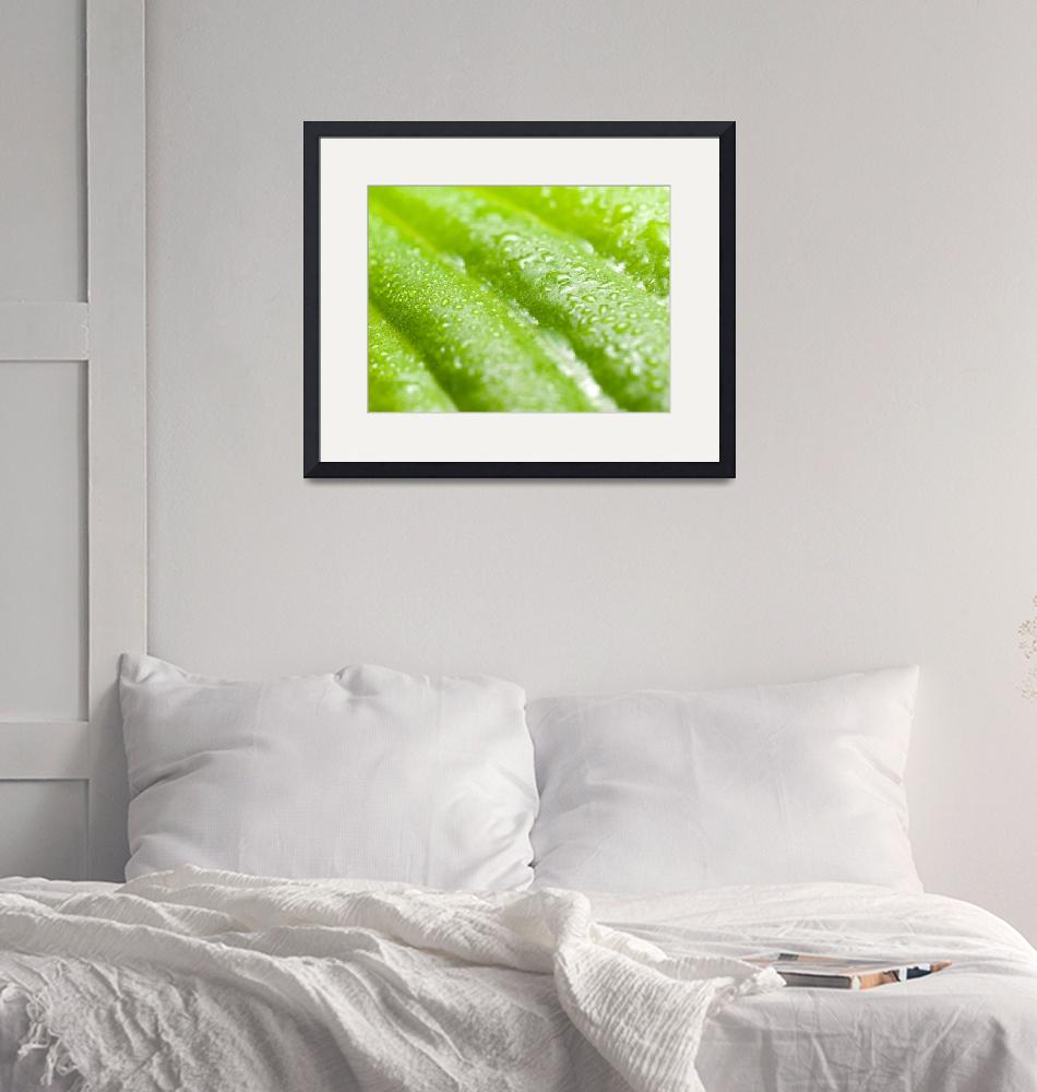 """""""Wet green leaf.""""  by Knulp"""