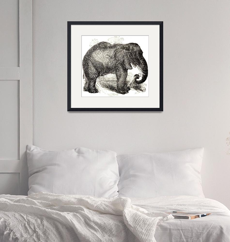 """Vintage Elephant Illustration (1891)""  by Alleycatshirts"