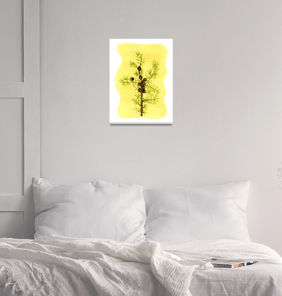 """""""JUNIPER (Juniperus communis)""""  (2008) by EveHoward"""