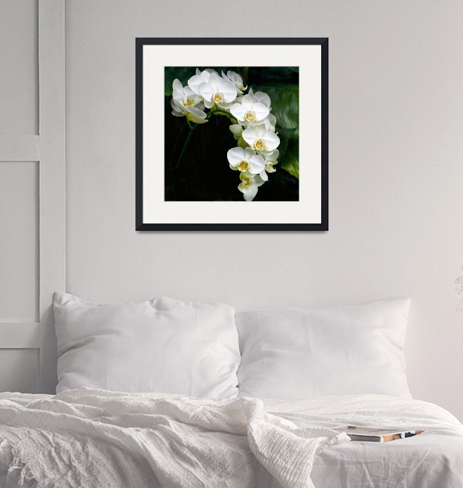 """""""White Moth Orchid Array On Black""""  (2017) by LightHeart"""