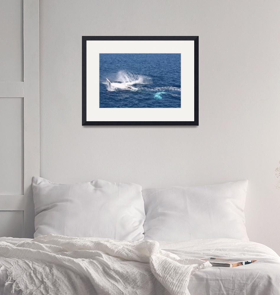 """""""NaP_ Whale Watching140""""  by nevilleprosser"""