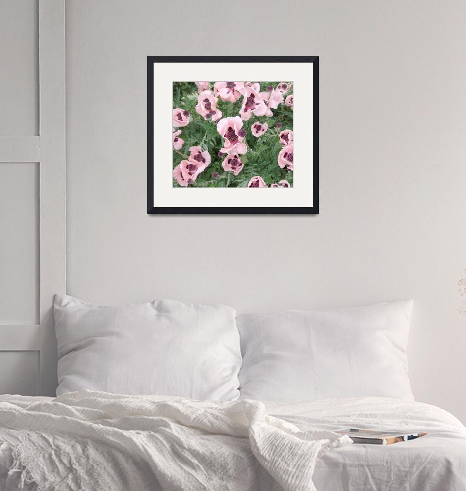 """""""Pink Poppies""""  (2011) by MarkRobertson"""