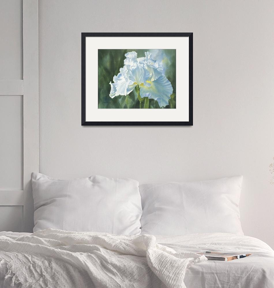 """""""White Iris""""  (2011) by Pacific-NW-Watercolors"""