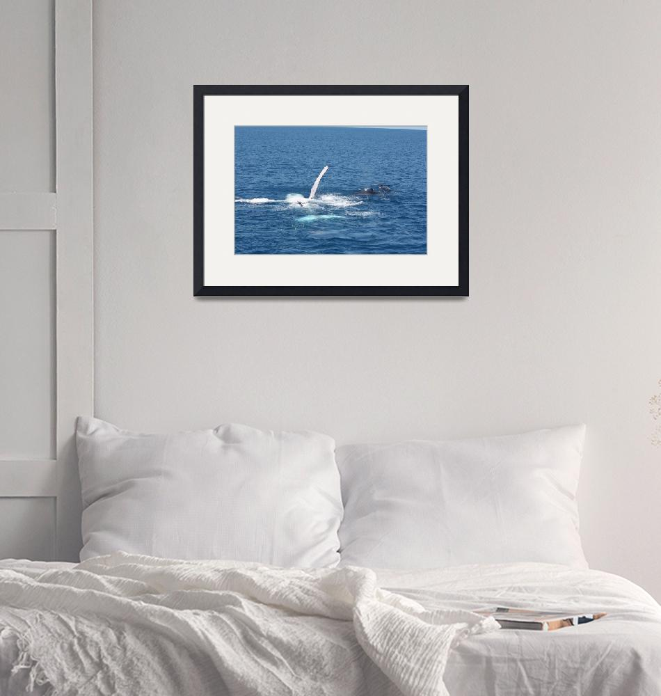 """""""NaP_ Whale Watching154""""  by nevilleprosser"""