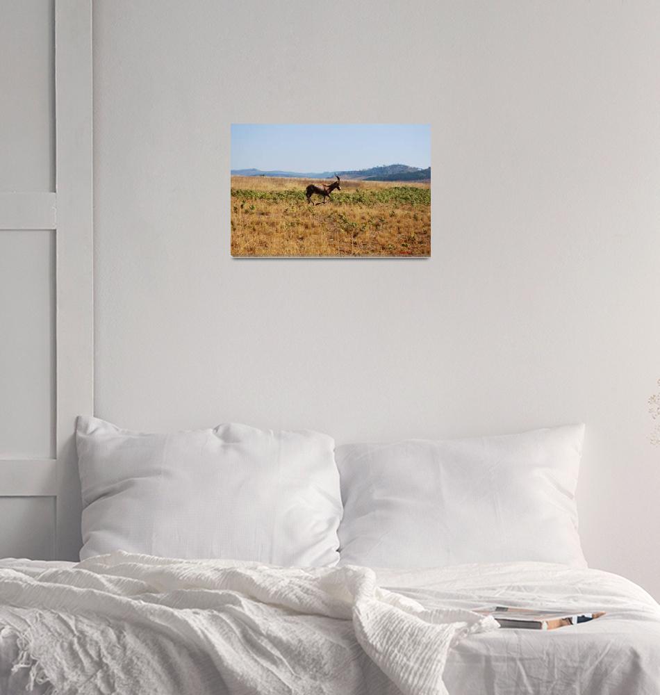 """""""Blesbok in Swaziland""""  (2008) by GregMerrin"""