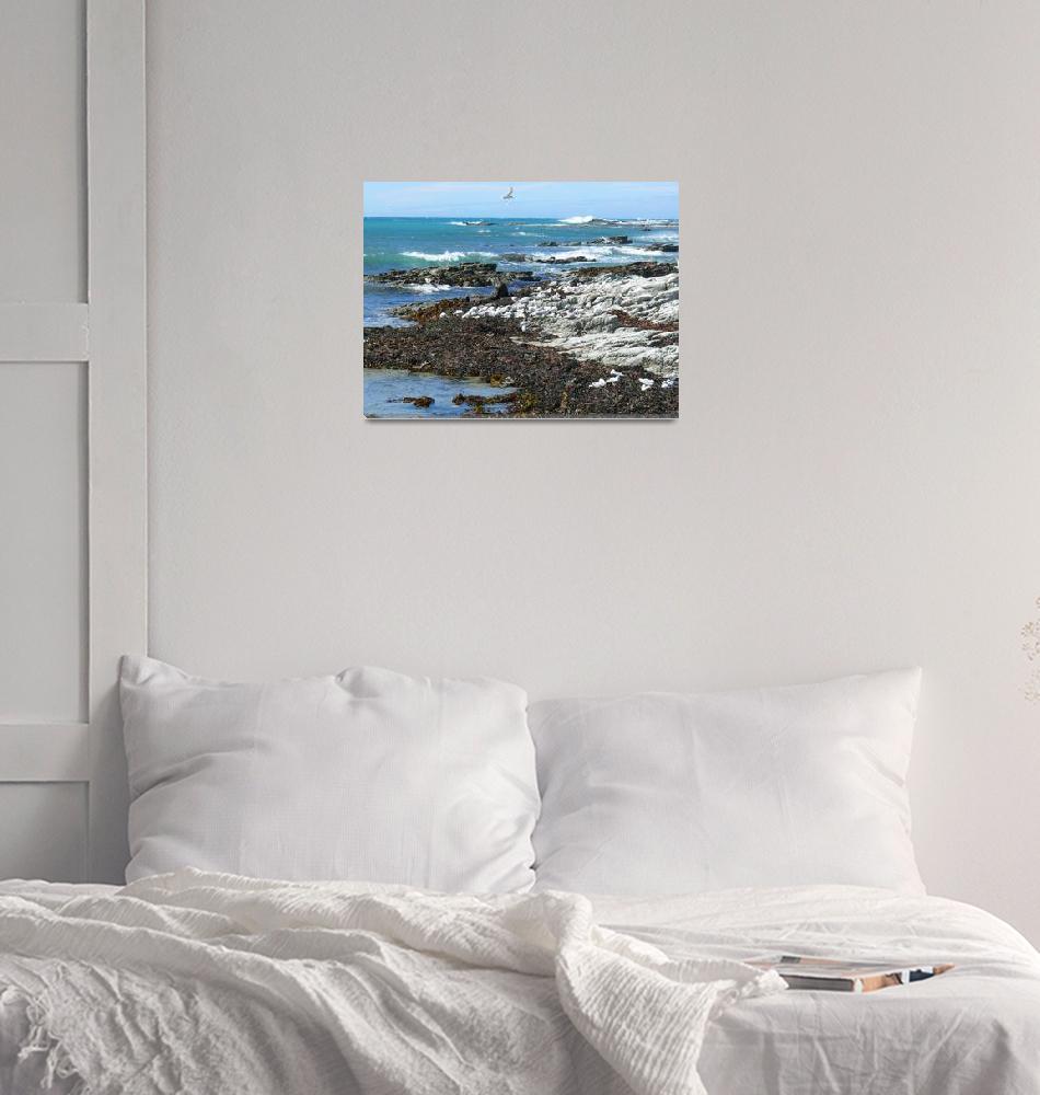 """Pacific Coast, Kaikoura, New Zealand""  (2008) by stockphotos"