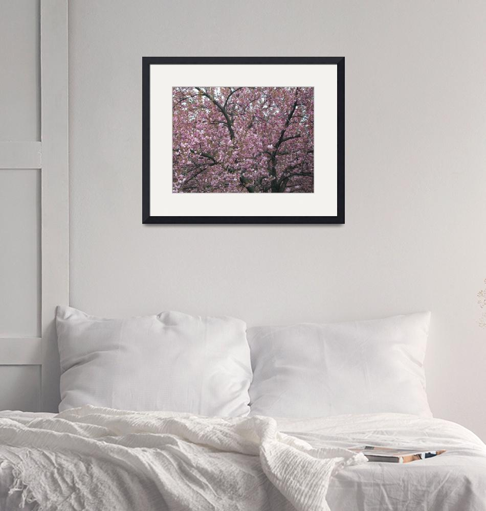 """""""Spring Cherry Blossoms""""  (2011) by EmmaLuLu"""