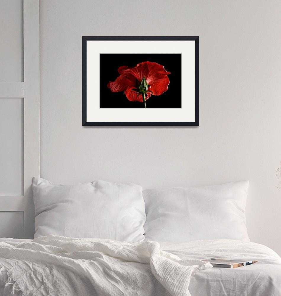 """""""Scarlet Hibiscus""""  (2018) by AnnG"""