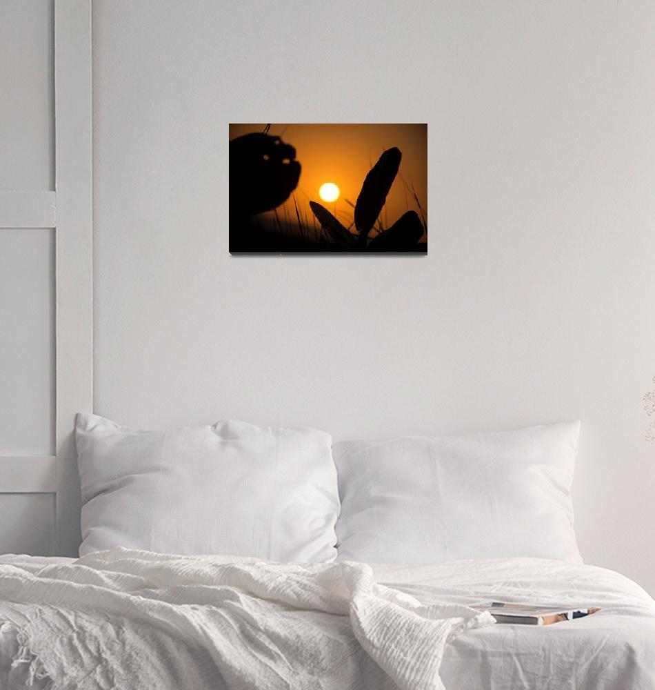 """Sunset on Caribbean""  (2019) by robertgrac"