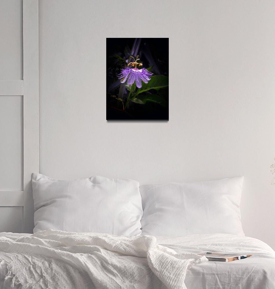 """Passion flower Black Light 1_filtered""  by ChrisCrowley"