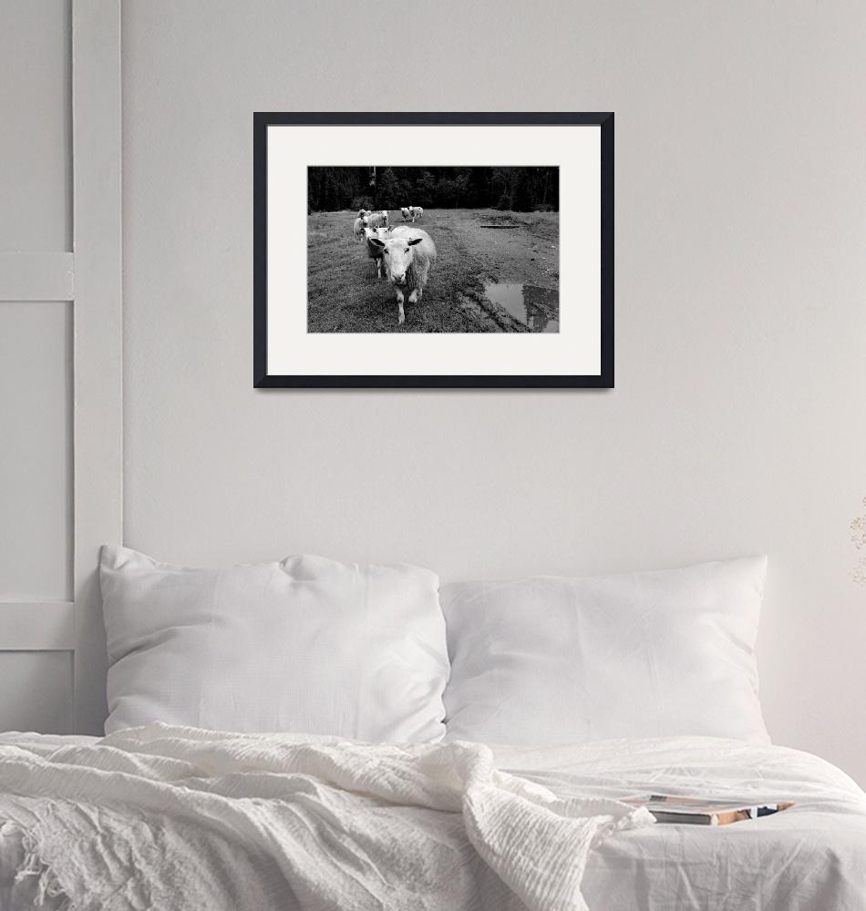 """""""sheep""""  (2008) by EricF"""