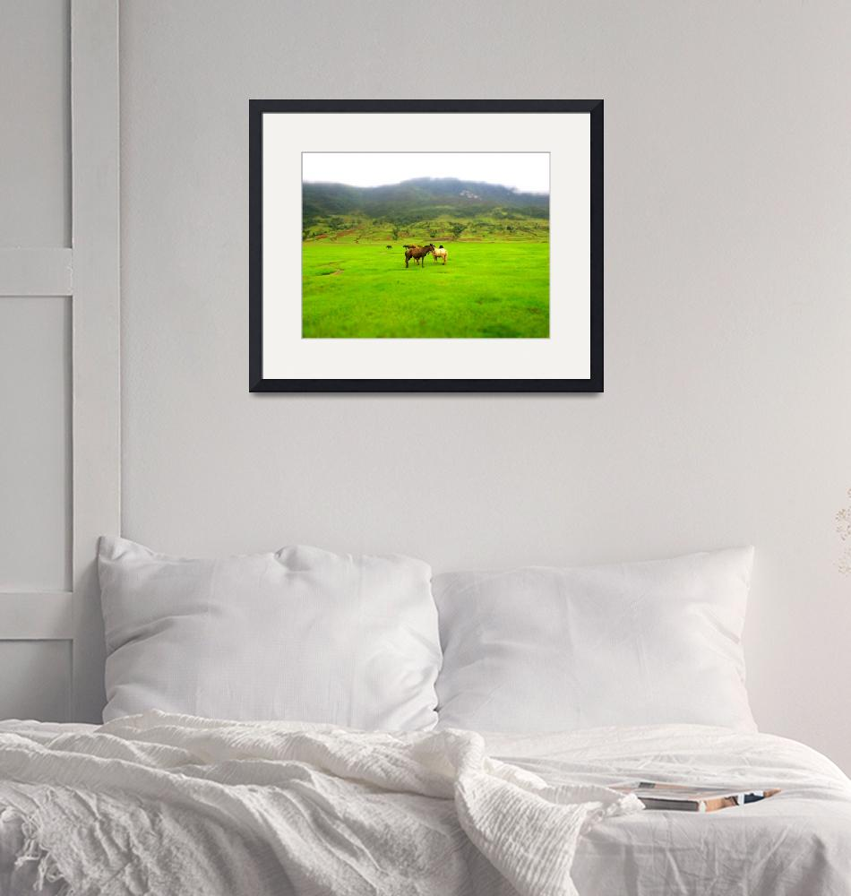 """""""Horses in Valley""""  (2011) by PhilBarnhart"""